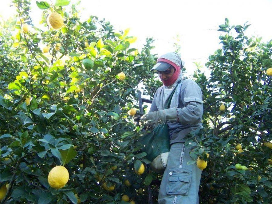 Planes Intercosecha: Desde hoy ya está disponible el pago para el sector del citrus