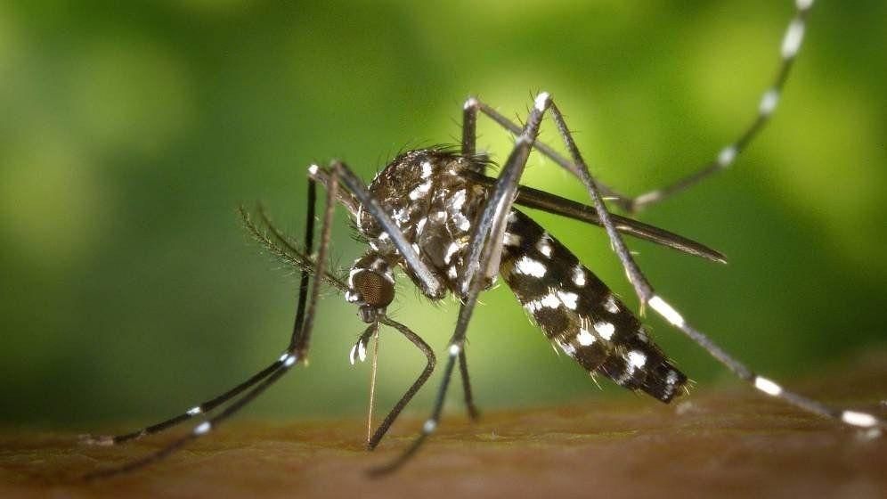Confirmaron 56 casos nuevos de dengue y ya son 169 infectados en Jujuy