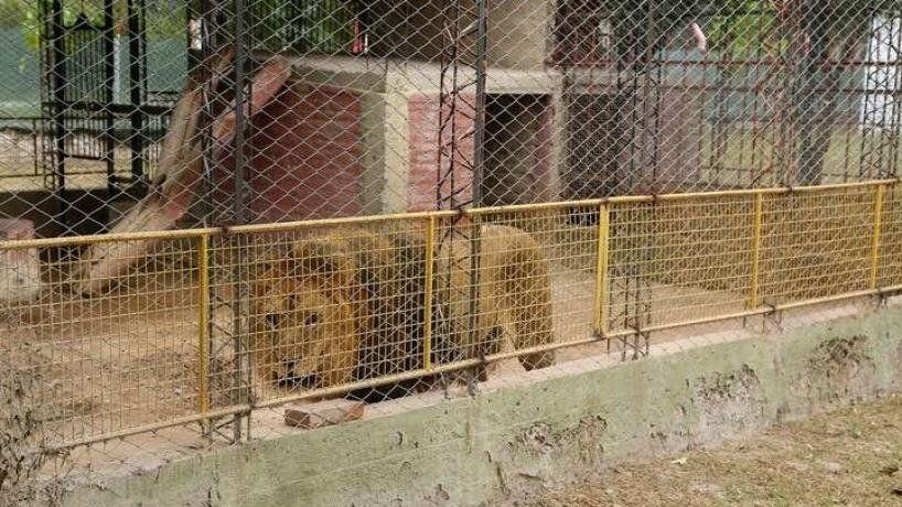 Finalizó el desalojo de animales del ex zoológico de la capital santiagueña