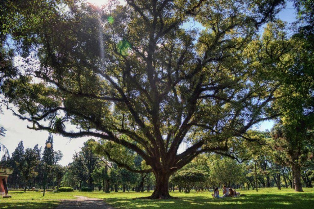 Expertos aseguran que faltan árboles en San Miguel de Tucumán