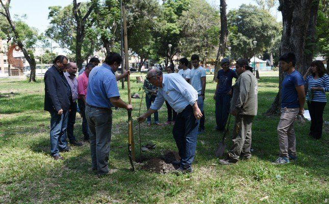 Desde el municipio capitalino afirman que se trabaja en la reforestación de la ciudad