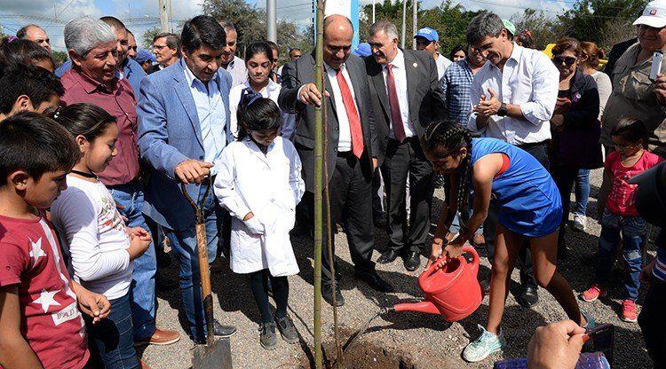 En dos años, la Provincia entregó 364 mil árboles para forestación