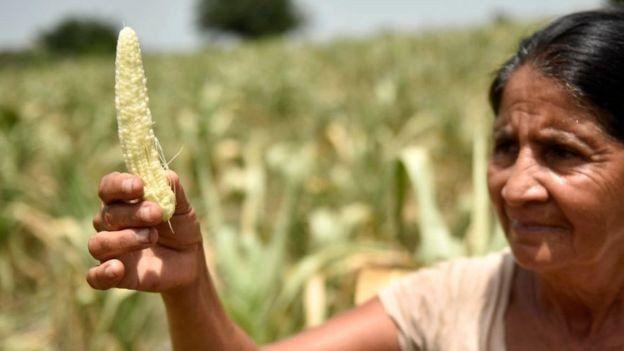 ¿Qué es el Corredor Seco y por qué está ligado a la pobreza extrema en casi toda Centroamérica?