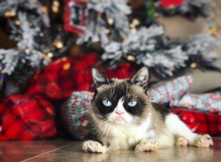 "Murió la gata ""Grumpy Cat"", la más famosa de la web"