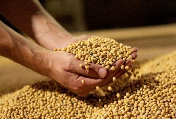 Soja: Por la caída del precio, se esperan menos ingresos