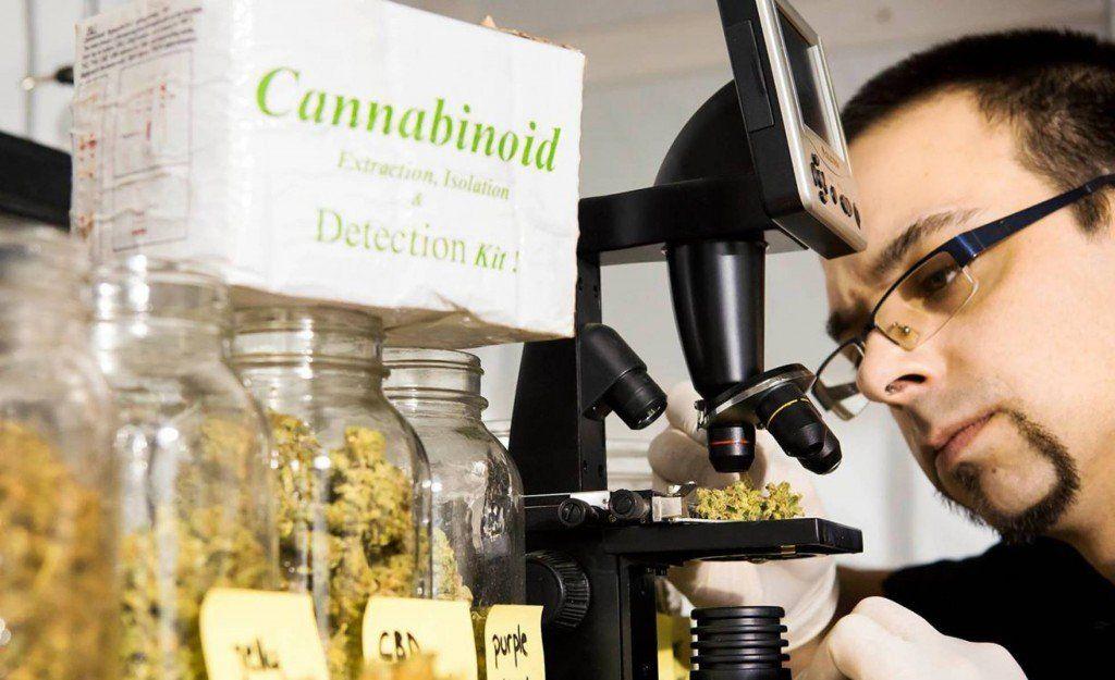 Cannabis medicinal: Canadá ya tiene un sumillier de marihuana