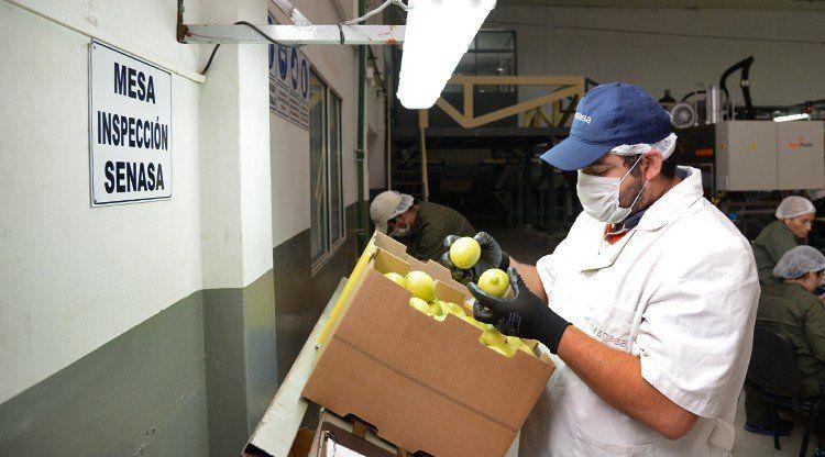 Incrementan controles por el desecho de excedentes citrícolas