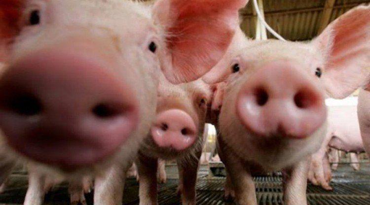Desarrollan en Tucumán la Semana de la Porcicultura 2019