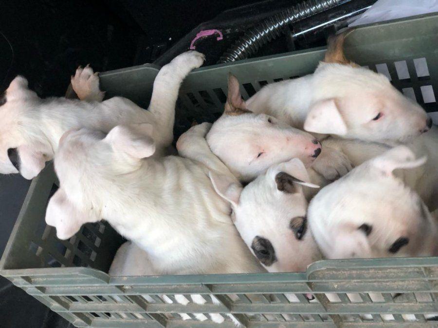 Recuperaron los siete perros que robaron de una vivienda en Yerba Buena