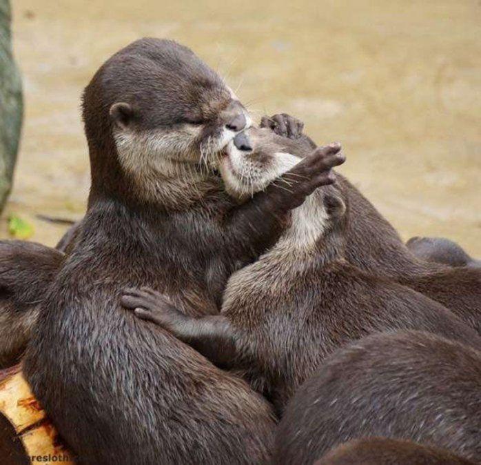 Mundo animal: ellos también se quieren