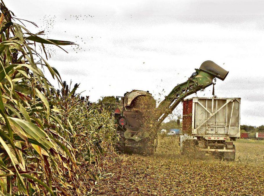 El clima y el precio del azúcar complican la zafra de este año