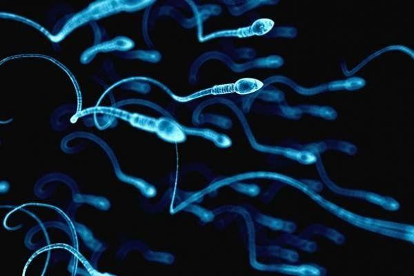 Elegir el sexo de la descendencia, ahora es posible gracias a la ciencia