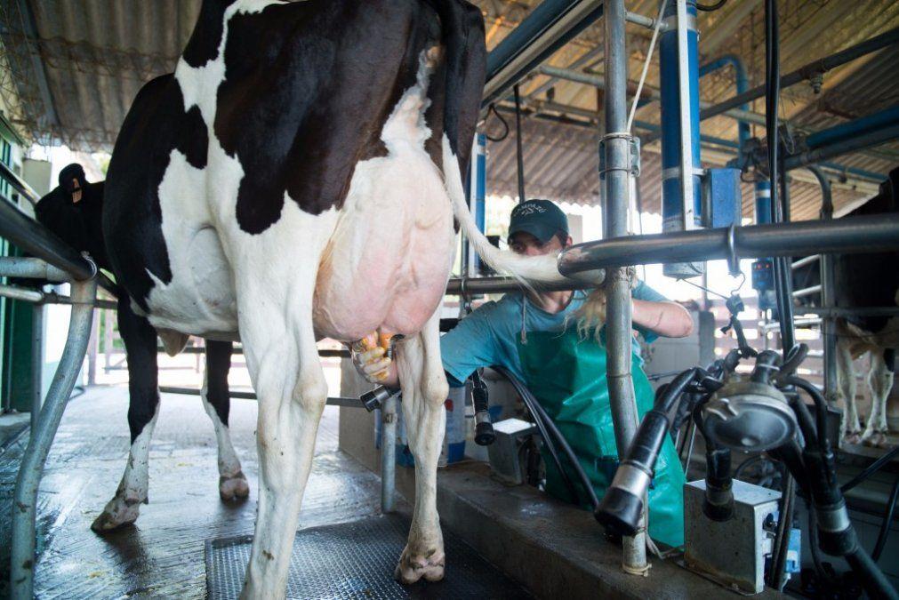 Pese a la inflación, no se modificó lo que percibe el productor por litro de leche