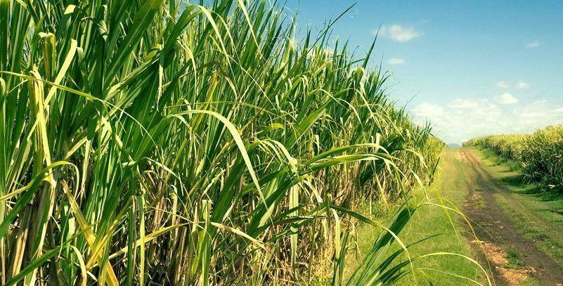 Hoy comienza el Congreso Internacional de Caña de Azúcar en Tucumán