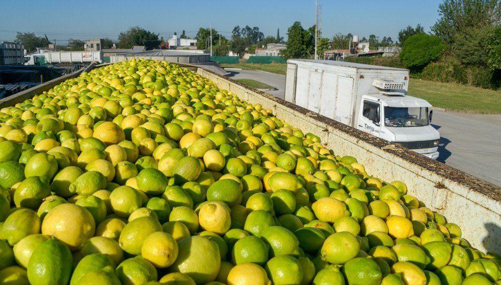 Un país necesitado de divisas celebra al limón en India