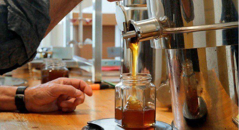 Por uso de agroquímicos, bajó la producción de miel en Argentina