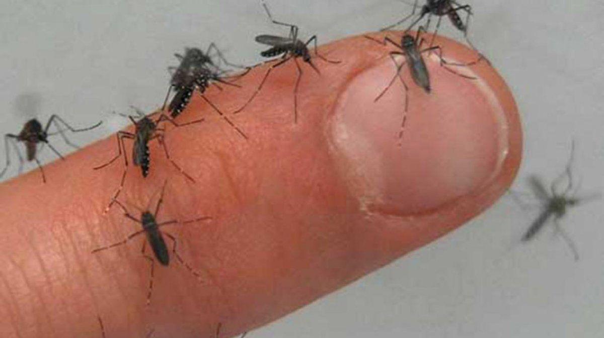 El Aedes aegyptidengue transmite el dengue y sigue sumando casos de personas infectadas.