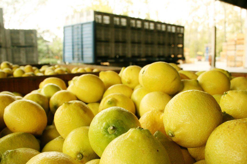 Convierten residuos del limón en energía eléctrica