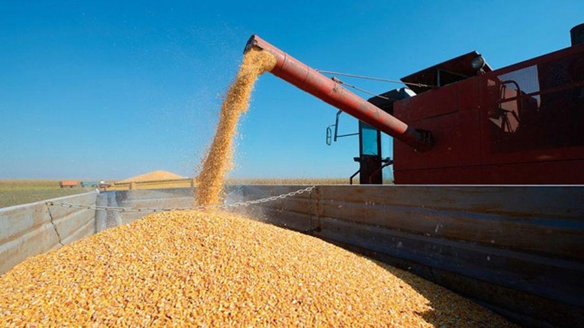Récord histórico de exportación de maíz