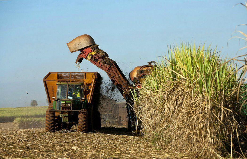 La cosecha de caña de azúcar registra un avance del 85%