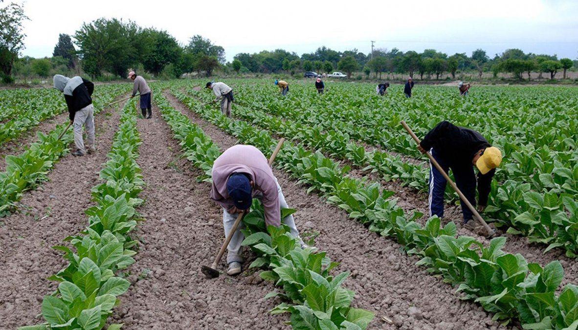 Definieron las fechas de cobro para los empleados rurales