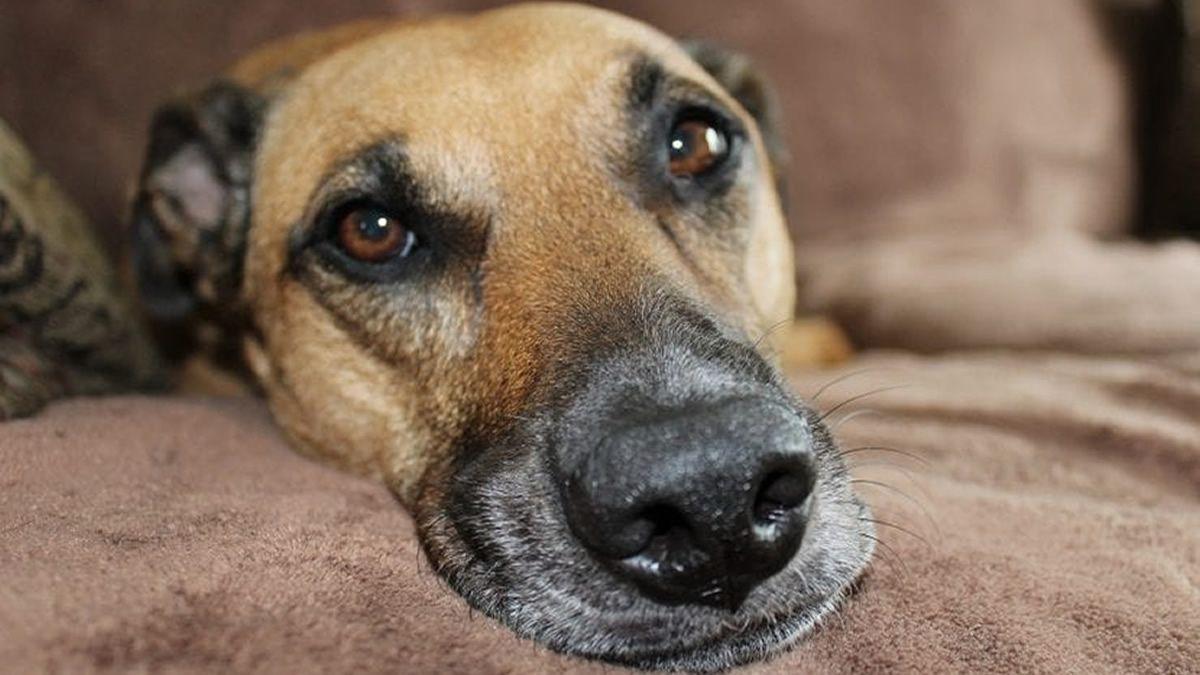 Inflación: ¿Cuánto cuesta tener un perro por mes?
