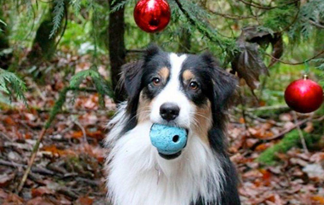 Una perrita ayuda a armar el árbol de navidad
