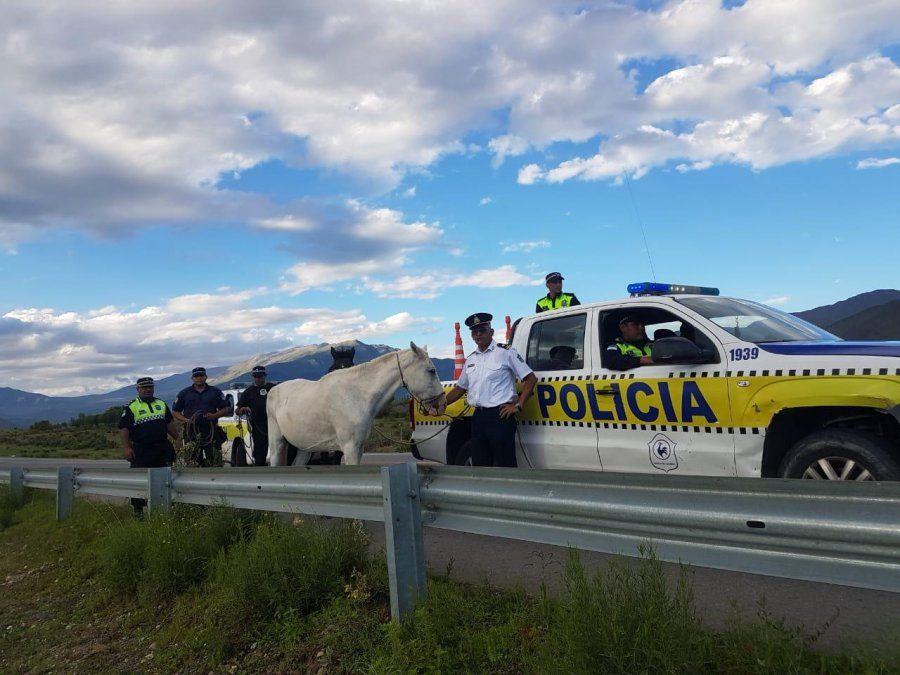 En casi 15 días secuestraron 10 animales en las rutas a los valles