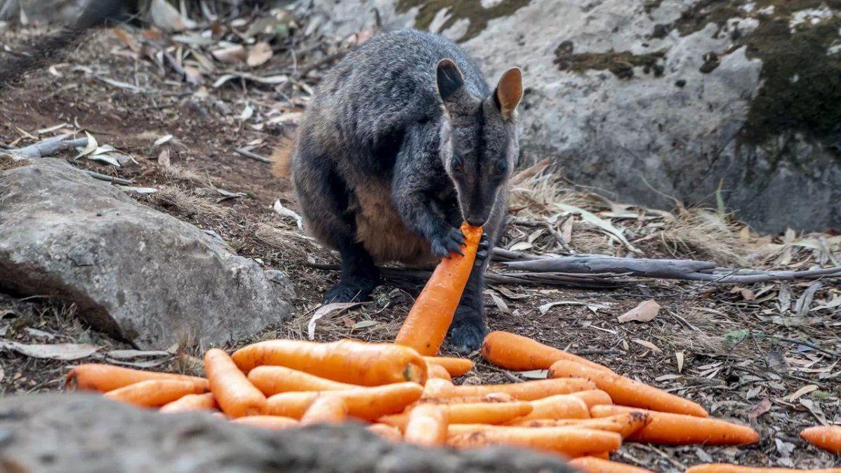 Resultado de imagen para australia alimenta los animales