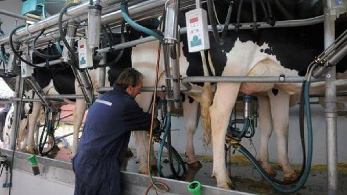 En 2019 cerraron 1.000 tambos y hay 100.000 vacas menos