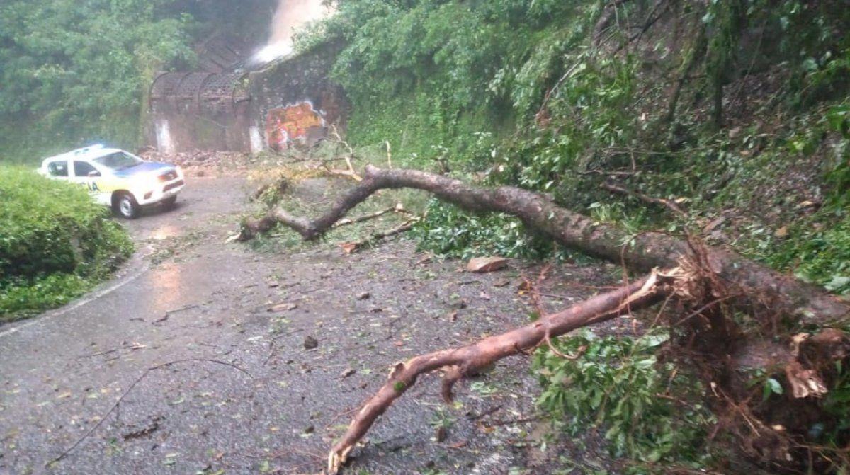 Ruta 338: se desprendió un árbol y bloqueó media calzada