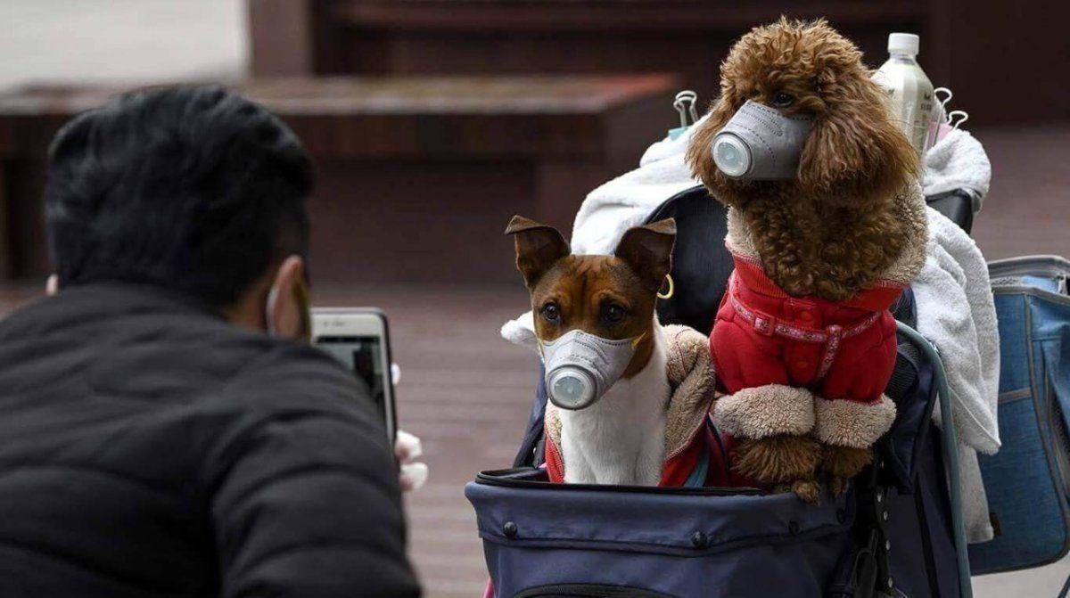 En China utilizaron barbijos en los perros como prevención.