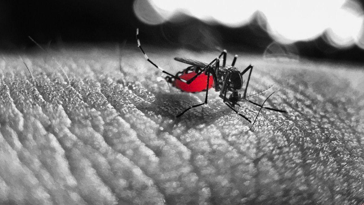 Suman 5925 los casos de dengue en Tucumán