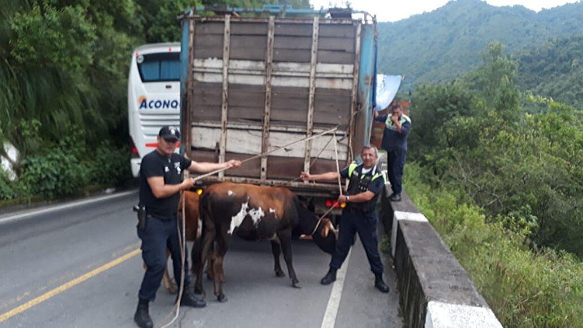 Todos los animales fueron secuestrados por Infracción a la Ley 3487 de Animales Sueltos.