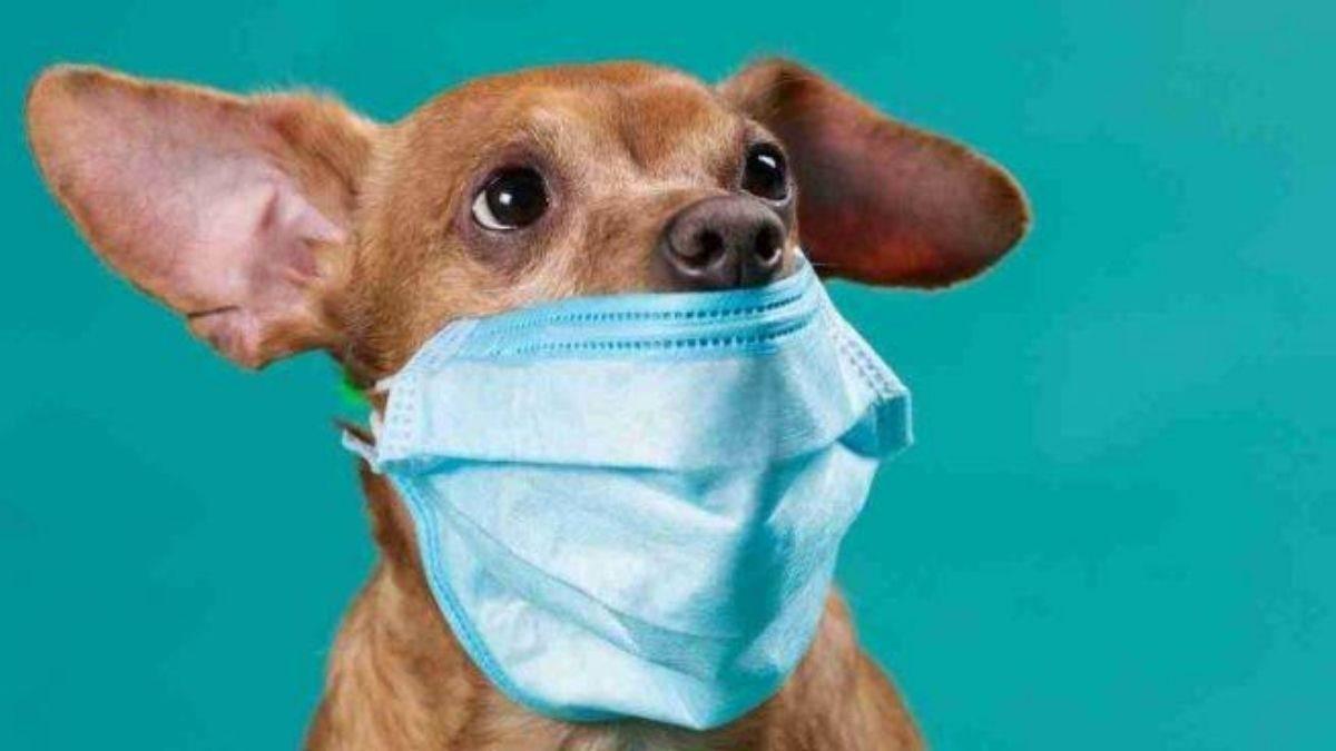 De que las mascotas contagian a humanos, no hay reportes