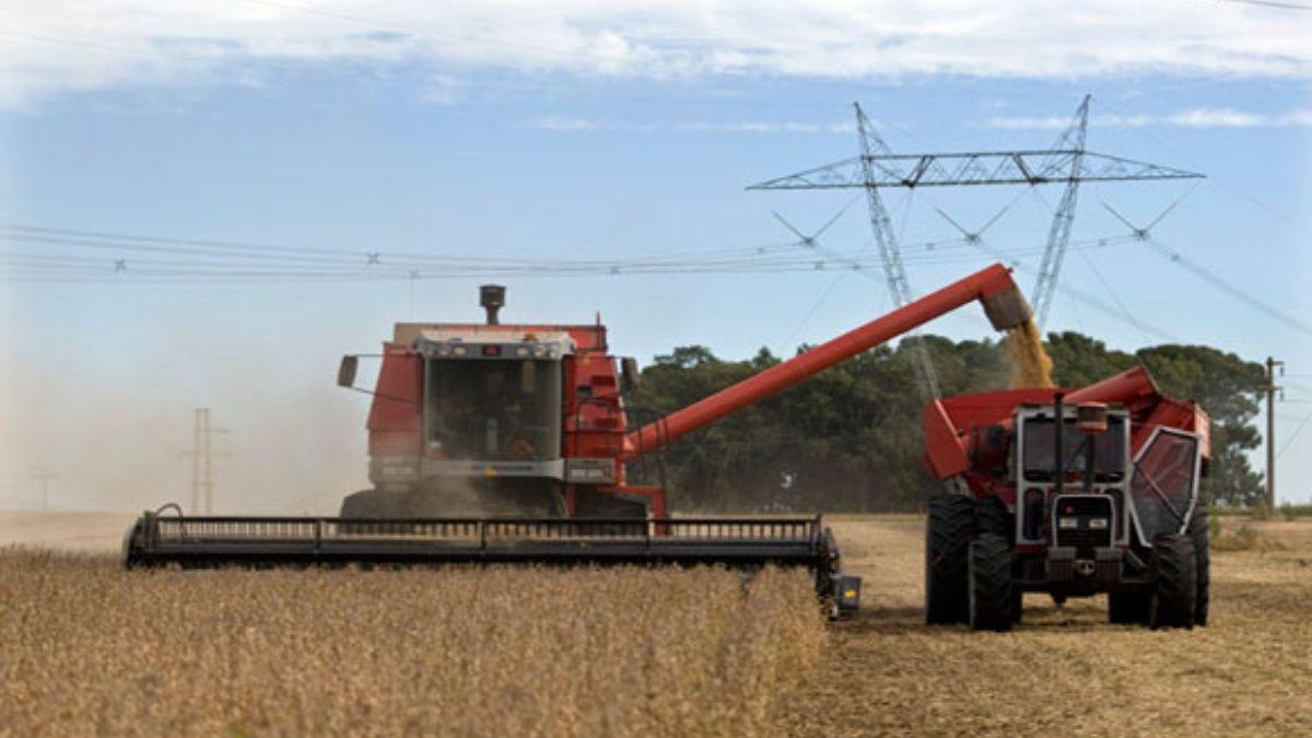 Por el clima y retenciones, producción agrícola será menor