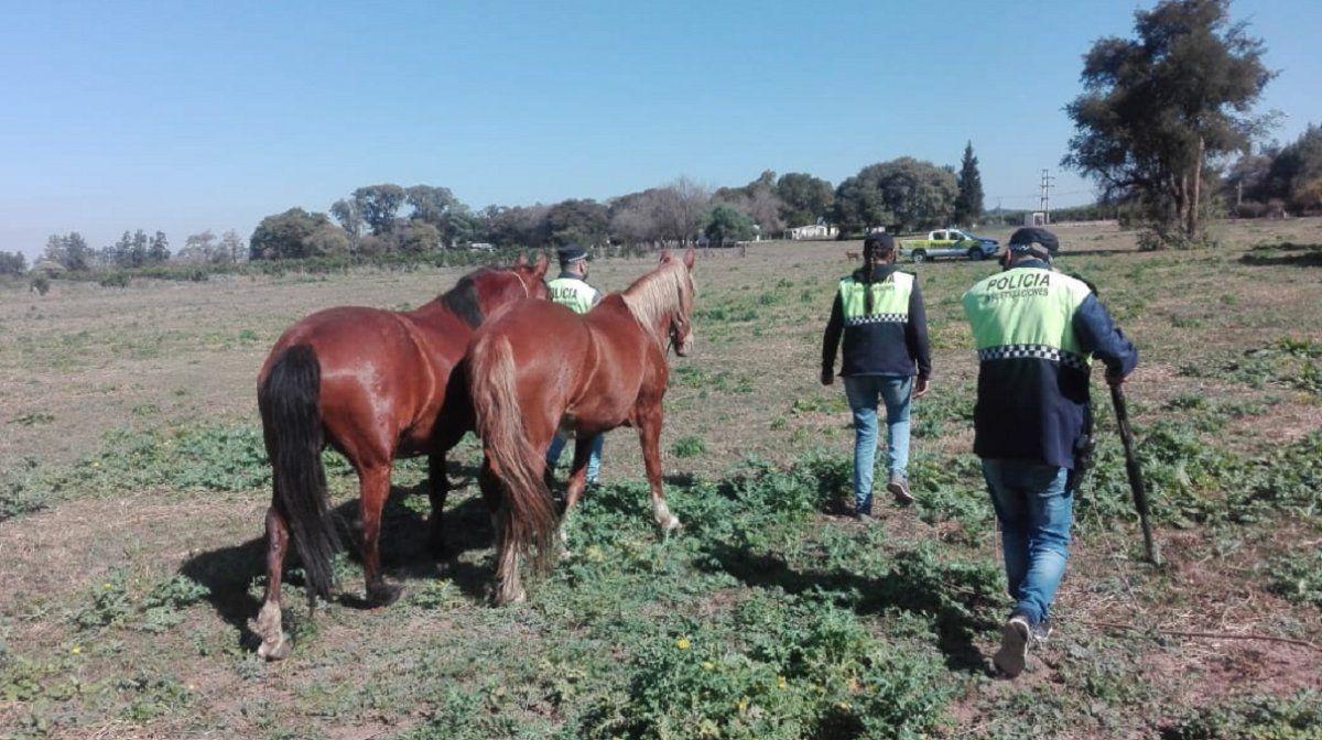 La Policía recuperó animales usados para cometer delitos rurales