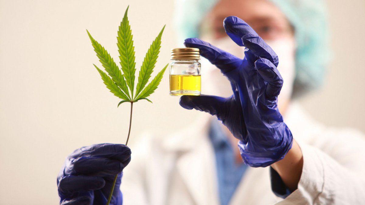 Cannabis: el eje está en el protagonismo de la industria