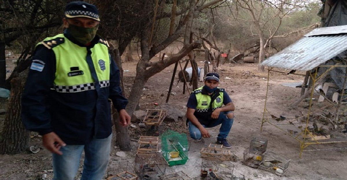Burruyacú: recuperan más de 250 aves autóctonas