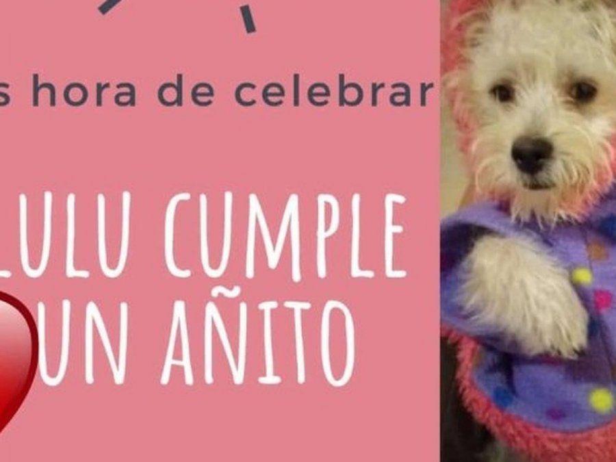 Funcionaria festejó el cumpleaños de su perro: fue imputada