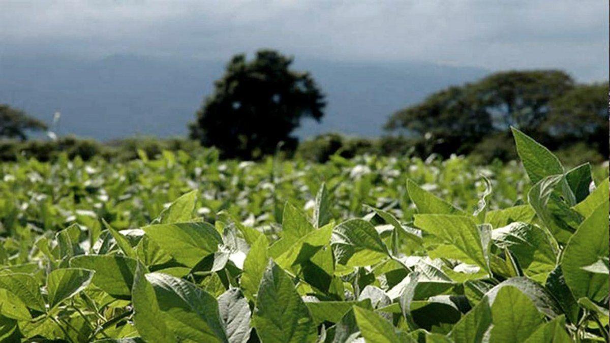 Comercialización de fertilizantes volverá a ser récord