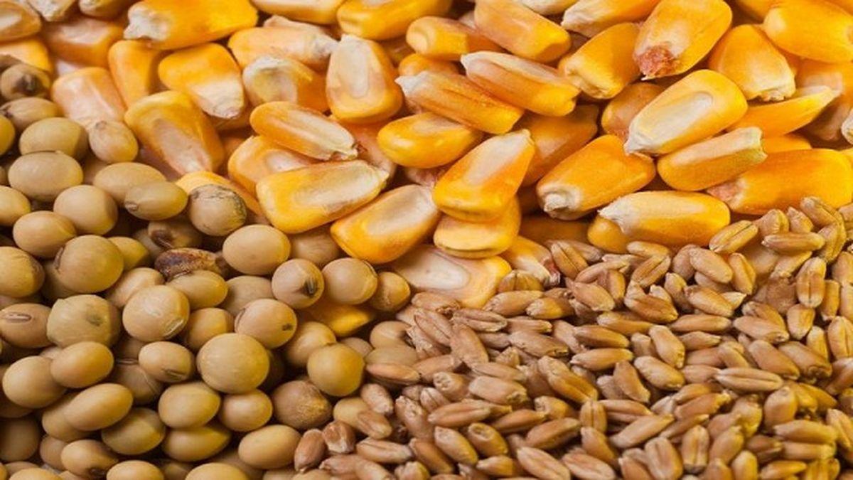 La cosecha de maíz y trigo logran restar hectáreas a la soja