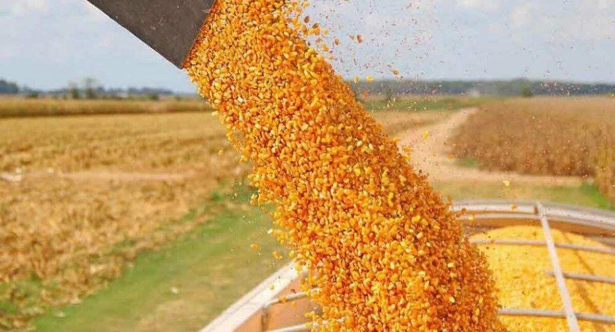 Maíz: levantan el cepo a las exportaciones y termina el paro