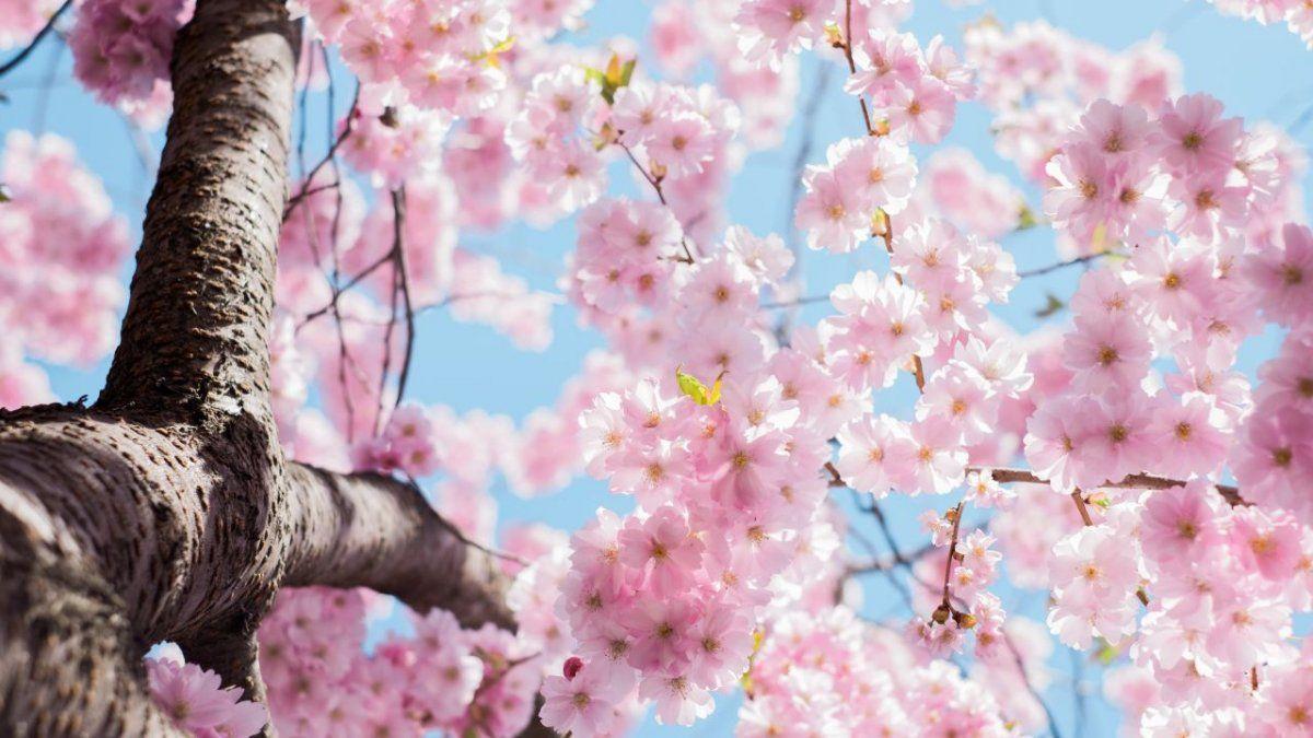¿Cuando comienza la primavera este año en Argentina?