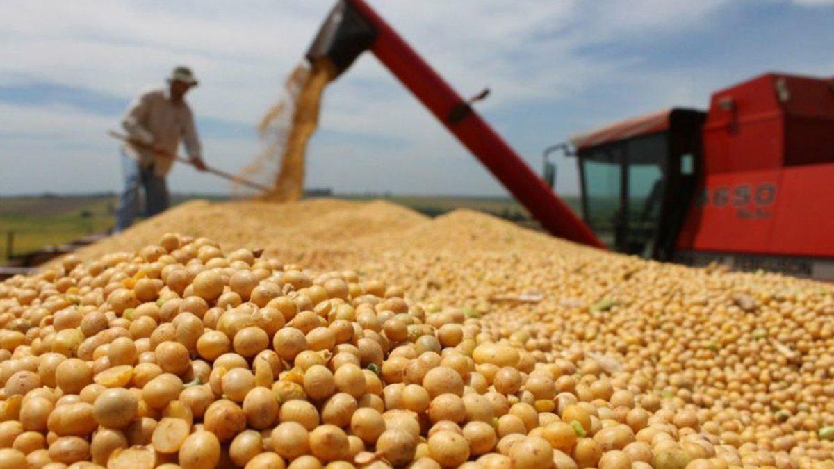 La soja volvió a subir y superó los 505 dólares por tonelada