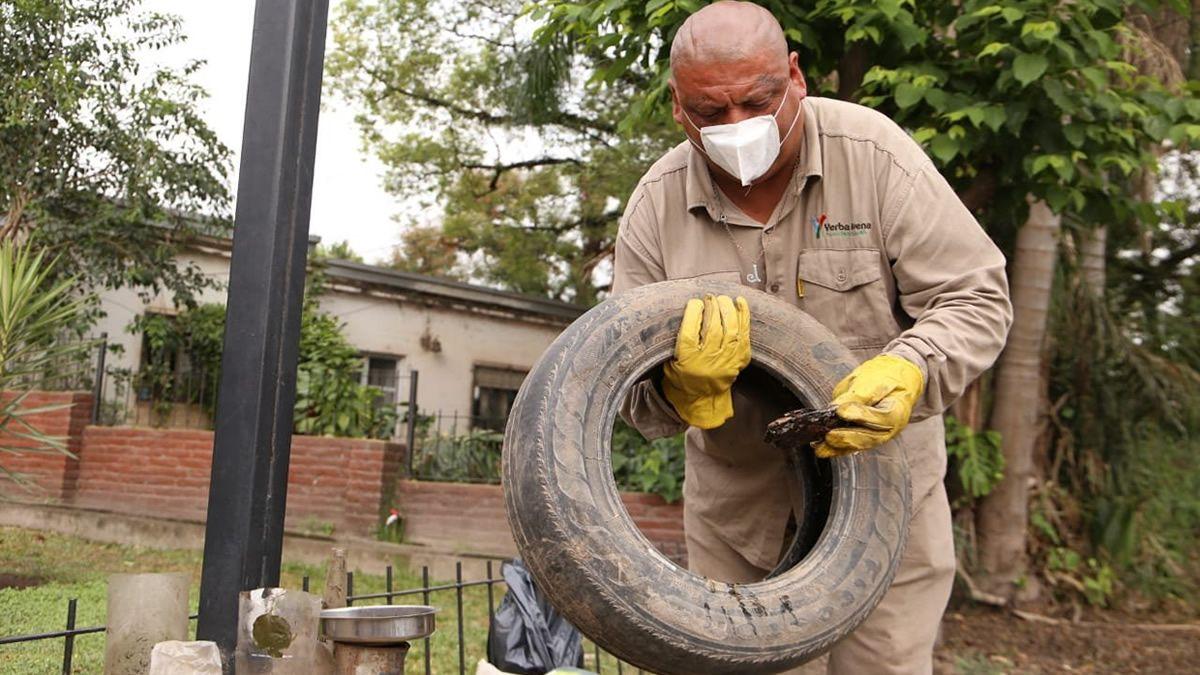 Dengue: encontraron huevos del mosquito en Yerba Buena