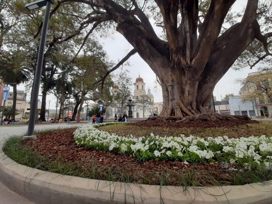 El tiempo en Tucumán: agradable y ascenso de la temperatura